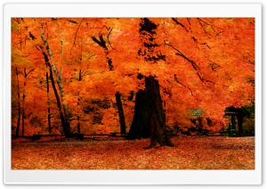 Orange Fall HD Wide Wallpaper for Widescreen