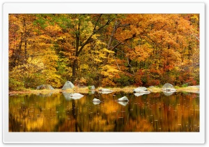Orange Fall Ultra HD Wallpaper for 4K UHD Widescreen desktop, tablet & smartphone