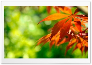 Orange Fall Leaves Against A Green Background HD Wide Wallpaper for Widescreen