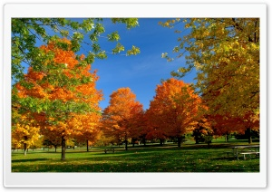Orange Fall Trees HD Wide Wallpaper for Widescreen