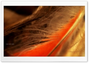 Orange Feather Macro HD Wide Wallpaper for Widescreen