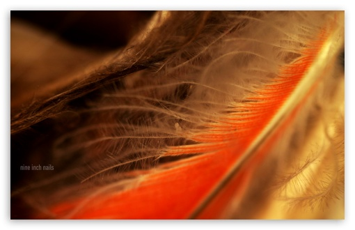 Orange Feather Macro HD wallpaper for Wide 16:10 5:3 Widescreen WHXGA WQXGA WUXGA WXGA WGA ; HD 16:9 High Definition WQHD QWXGA 1080p 900p 720p QHD nHD ; Standard 4:3 3:2 Fullscreen UXGA XGA SVGA DVGA HVGA HQVGA devices ( Apple PowerBook G4 iPhone 4 3G 3GS iPod Touch ) ; iPad 1/2/Mini ; Mobile 4:3 5:3 3:2 16:9 - UXGA XGA SVGA WGA DVGA HVGA HQVGA devices ( Apple PowerBook G4 iPhone 4 3G 3GS iPod Touch ) WQHD QWXGA 1080p 900p 720p QHD nHD ;