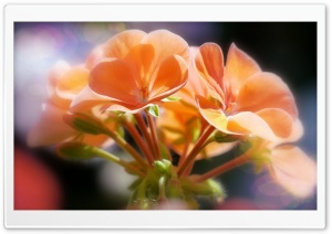 Orange Flowers Sunlight HD Wide Wallpaper for Widescreen