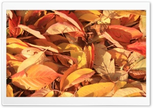 Orange Foliage HD Wide Wallpaper for Widescreen