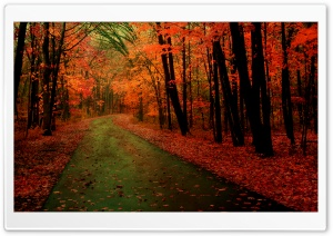 Orange Forest HD Wide Wallpaper for Widescreen
