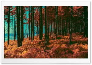 Orange Forest, Sea, Infrared Photography HD Wide Wallpaper for 4K UHD Widescreen desktop & smartphone