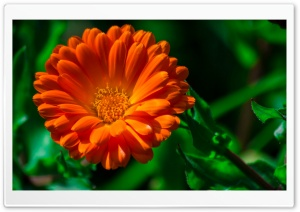 Orange Green HD Wide Wallpaper for Widescreen
