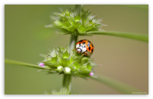 Orange Ladybug HD wallpaper for Wide 16:10 5:3 Widescreen WHXGA WQXGA WUXGA WXGA WGA ; HD 16:9 High Definition WQHD QWXGA 1080p 900p 720p QHD nHD ; Standard 4:3 5:4 3:2 Fullscreen UXGA XGA SVGA QSXGA SXGA DVGA HVGA HQVGA devices ( Apple PowerBook G4 iPhone 4 3G 3GS iPod Touch ) ; Tablet 1:1 ; iPad 1/2/Mini ; Mobile 4:3 5:3 3:2 16:9 5:4 - UXGA XGA SVGA WGA DVGA HVGA HQVGA devices ( Apple PowerBook G4 iPhone 4 3G 3GS iPod Touch ) WQHD QWXGA 1080p 900p 720p QHD nHD QSXGA SXGA ;
