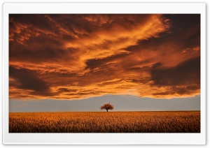 Orange Landscape HD Wide Wallpaper for Widescreen