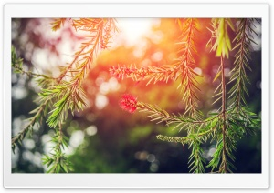 Orange Light Bokeh HD Wide Wallpaper for Widescreen