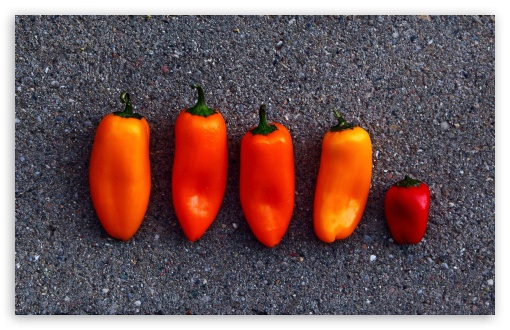 Orange Peppers ❤ 4K UHD Wallpaper for Wide 16:10 5:3 Widescreen WHXGA WQXGA WUXGA WXGA WGA ; 4K UHD 16:9 Ultra High Definition 2160p 1440p 1080p 900p 720p ; Standard 4:3 5:4 3:2 Fullscreen UXGA XGA SVGA QSXGA SXGA DVGA HVGA HQVGA ( Apple PowerBook G4 iPhone 4 3G 3GS iPod Touch ) ; Tablet 1:1 ; iPad 1/2/Mini ; Mobile 4:3 5:3 3:2 16:9 5:4 - UXGA XGA SVGA WGA DVGA HVGA HQVGA ( Apple PowerBook G4 iPhone 4 3G 3GS iPod Touch ) 2160p 1440p 1080p 900p 720p QSXGA SXGA ; Dual 4:3 5:4 UXGA XGA SVGA QSXGA SXGA ;