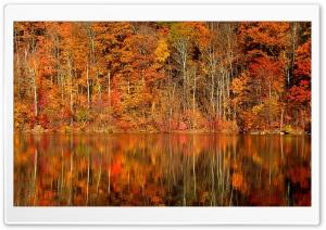 Orange Reflection Ultra HD Wallpaper for 4K UHD Widescreen desktop, tablet & smartphone