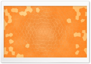 Orange Shell HD Wide Wallpaper for Widescreen