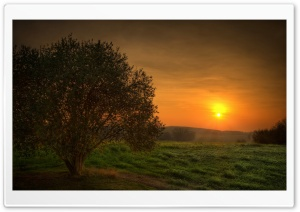 Orange Sundown HD Wide Wallpaper for Widescreen