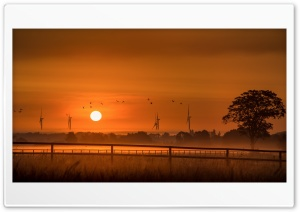 Orange Sunrise, Wind Turbines, Birds, Tree, Morning HD Wide Wallpaper for 4K UHD Widescreen desktop & smartphone