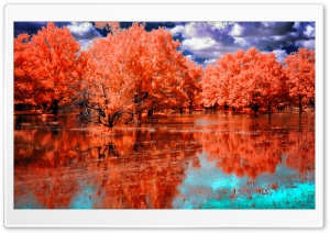 Orange Swamp HD Wide Wallpaper for Widescreen