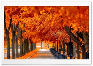 Orange Trees Fall HD Wide Wallpaper for Widescreen
