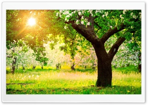 Orchard HD Wide Wallpaper for Widescreen