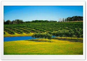 Orchard Landscape HD Wide Wallpaper for Widescreen