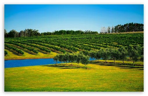 Orchard Landscape ❤ 4K UHD Wallpaper for Wide 16:10 5:3 Widescreen WHXGA WQXGA WUXGA WXGA WGA ; 4K UHD 16:9 Ultra High Definition 2160p 1440p 1080p 900p 720p ; Standard 4:3 5:4 3:2 Fullscreen UXGA XGA SVGA QSXGA SXGA DVGA HVGA HQVGA ( Apple PowerBook G4 iPhone 4 3G 3GS iPod Touch ) ; Smartphone 16:9 3:2 5:3 2160p 1440p 1080p 900p 720p DVGA HVGA HQVGA ( Apple PowerBook G4 iPhone 4 3G 3GS iPod Touch ) WGA ; Tablet 1:1 ; iPad 1/2/Mini ; Mobile 4:3 5:3 3:2 16:9 5:4 - UXGA XGA SVGA WGA DVGA HVGA HQVGA ( Apple PowerBook G4 iPhone 4 3G 3GS iPod Touch ) 2160p 1440p 1080p 900p 720p QSXGA SXGA ;