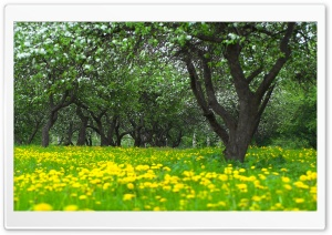 Orchard Spring HD Wide Wallpaper for Widescreen
