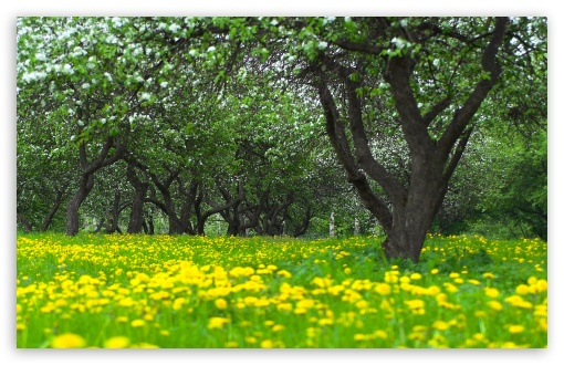 Orchard Spring HD wallpaper for Wide 16:10 5:3 Widescreen WHXGA WQXGA WUXGA WXGA WGA ; HD 16:9 High Definition WQHD QWXGA 1080p 900p 720p QHD nHD ; Standard 4:3 5:4 3:2 Fullscreen UXGA XGA SVGA QSXGA SXGA DVGA HVGA HQVGA devices ( Apple PowerBook G4 iPhone 4 3G 3GS iPod Touch ) ; Tablet 1:1 ; iPad 1/2/Mini ; Mobile 4:3 5:3 3:2 16:9 5:4 - UXGA XGA SVGA WGA DVGA HVGA HQVGA devices ( Apple PowerBook G4 iPhone 4 3G 3GS iPod Touch ) WQHD QWXGA 1080p 900p 720p QHD nHD QSXGA SXGA ;