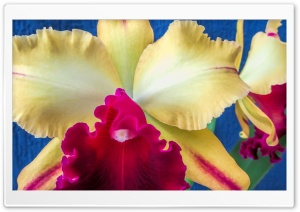 Orchid Blc Toshie Aoki Ultra HD Wallpaper for 4K UHD Widescreen desktop, tablet & smartphone