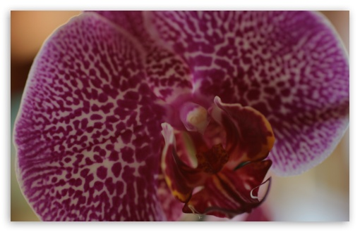 Orchid Macro ❤ 4K UHD Wallpaper for Wide 16:10 5:3 Widescreen WHXGA WQXGA WUXGA WXGA WGA ; 4K UHD 16:9 Ultra High Definition 2160p 1440p 1080p 900p 720p ; UHD 16:9 2160p 1440p 1080p 900p 720p ; Standard 4:3 5:4 3:2 Fullscreen UXGA XGA SVGA QSXGA SXGA DVGA HVGA HQVGA ( Apple PowerBook G4 iPhone 4 3G 3GS iPod Touch ) ; Tablet 1:1 ; iPad 1/2/Mini ; Mobile 4:3 5:3 3:2 16:9 5:4 - UXGA XGA SVGA WGA DVGA HVGA HQVGA ( Apple PowerBook G4 iPhone 4 3G 3GS iPod Touch ) 2160p 1440p 1080p 900p 720p QSXGA SXGA ;