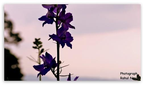 Orchids of Dooars ❤ 4K UHD Wallpaper for 4K UHD 16:9 Ultra High Definition 2160p 1440p 1080p 900p 720p ; Mobile 16:9 - 2160p 1440p 1080p 900p 720p ;