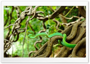 Oriental Vine Snake HD Wide Wallpaper for Widescreen