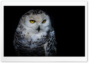 Owl HD Wide Wallpaper for 4K UHD Widescreen desktop & smartphone