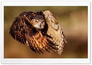 Owl HD Wide Wallpaper for 4K UHD Widescreen desktop & smartphone
