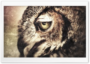 Owl Art HD Wide Wallpaper for Widescreen