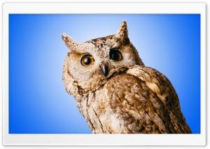 Owl Blue Ultra HD Wallpaper for 4K UHD Widescreen desktop, tablet & smartphone