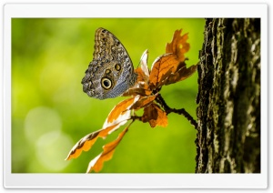 Owl Butterfly HD Wide Wallpaper for Widescreen