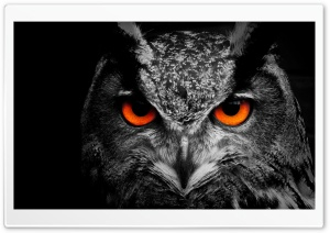 Owl Eye HD Wide Wallpaper for Widescreen