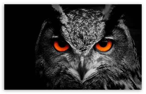 Owl Eye ❤ 4K UHD Wallpaper for Wide 16:10 5:3 Widescreen WHXGA WQXGA WUXGA WXGA WGA ; UltraWide 21:9 24:10 ; 4K UHD 16:9 Ultra High Definition 2160p 1440p 1080p 900p 720p ; UHD 16:9 2160p 1440p 1080p 900p 720p ; Standard 4:3 5:4 3:2 Fullscreen UXGA XGA SVGA QSXGA SXGA DVGA HVGA HQVGA ( Apple PowerBook G4 iPhone 4 3G 3GS iPod Touch ) ; Tablet 1:1 ; iPad 1/2/Mini ; Mobile 4:3 5:3 3:2 16:9 5:4 - UXGA XGA SVGA WGA DVGA HVGA HQVGA ( Apple PowerBook G4 iPhone 4 3G 3GS iPod Touch ) 2160p 1440p 1080p 900p 720p QSXGA SXGA ;