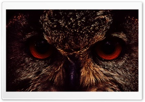 Owl Face HD Wide Wallpaper for Widescreen