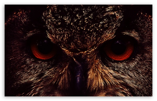 Owl Face HD wallpaper for Wide 16:10 5:3 Widescreen WHXGA WQXGA WUXGA WXGA WGA ; HD 16:9 High Definition WQHD QWXGA 1080p 900p 720p QHD nHD ; Standard 4:3 Fullscreen UXGA XGA SVGA ; iPad 1/2/Mini ; Mobile 4:3 5:3 - UXGA XGA SVGA WGA ;