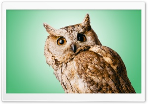 Owl Green Ultra HD Wallpaper for 4K UHD Widescreen desktop, tablet & smartphone
