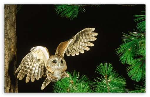 Owl In The Fir Tree ❤ 4K UHD Wallpaper for Wide 16:10 5:3 Widescreen WHXGA WQXGA WUXGA WXGA WGA ; 4K UHD 16:9 Ultra High Definition 2160p 1440p 1080p 900p 720p ; Standard 4:3 5:4 3:2 Fullscreen UXGA XGA SVGA QSXGA SXGA DVGA HVGA HQVGA ( Apple PowerBook G4 iPhone 4 3G 3GS iPod Touch ) ; Tablet 1:1 ; iPad 1/2/Mini ; Mobile 4:3 5:3 3:2 16:9 5:4 - UXGA XGA SVGA WGA DVGA HVGA HQVGA ( Apple PowerBook G4 iPhone 4 3G 3GS iPod Touch ) 2160p 1440p 1080p 900p 720p QSXGA SXGA ;