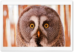 Owl Portrait HD Wide Wallpaper for Widescreen