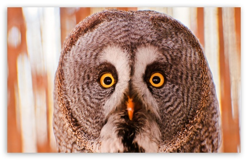 Owl Portrait HD wallpaper for Standard 4:3 5:4 Fullscreen UXGA XGA SVGA QSXGA SXGA ; Wide 16:10 5:3 Widescreen WHXGA WQXGA WUXGA WXGA WGA ; HD 16:9 High Definition WQHD QWXGA 1080p 900p 720p QHD nHD ; Other 3:2 DVGA HVGA HQVGA devices ( Apple PowerBook G4 iPhone 4 3G 3GS iPod Touch ) ; Mobile VGA WVGA iPhone iPad PSP Phone - VGA QVGA Smartphone ( PocketPC GPS iPod Zune BlackBerry HTC Samsung LG Nokia Eten Asus ) WVGA WQVGA Smartphone ( HTC Samsung Sony Ericsson LG Vertu MIO ) HVGA Smartphone ( Apple iPhone iPod BlackBerry HTC Samsung Nokia ) Sony PSP Zune HD Zen ;