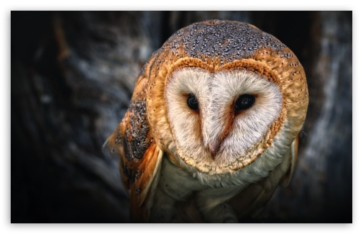 Owl Portrait HD wallpaper for Wide 16:10 5:3 Widescreen WHXGA WQXGA WUXGA WXGA WGA ; HD 16:9 High Definition WQHD QWXGA 1080p 900p 720p QHD nHD ; Standard 4:3 5:4 3:2 Fullscreen UXGA XGA SVGA QSXGA SXGA DVGA HVGA HQVGA devices ( Apple PowerBook G4 iPhone 4 3G 3GS iPod Touch ) ; Tablet 1:1 ; iPad 1/2/Mini ; Mobile 4:3 5:3 3:2 16:9 5:4 - UXGA XGA SVGA WGA DVGA HVGA HQVGA devices ( Apple PowerBook G4 iPhone 4 3G 3GS iPod Touch ) WQHD QWXGA 1080p 900p 720p QHD nHD QSXGA SXGA ;