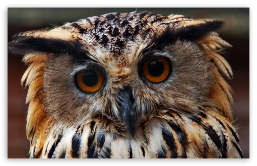 Owl Predator Close Up ❤ 4K UHD Wallpaper for Wide 16:10 5:3 Widescreen WHXGA WQXGA WUXGA WXGA WGA ; 4K UHD 16:9 Ultra High Definition 2160p 1440p 1080p 900p 720p ; Standard 4:3 5:4 3:2 Fullscreen UXGA XGA SVGA QSXGA SXGA DVGA HVGA HQVGA ( Apple PowerBook G4 iPhone 4 3G 3GS iPod Touch ) ; Tablet 1:1 ; iPad 1/2/Mini ; Mobile 4:3 5:3 3:2 16:9 5:4 - UXGA XGA SVGA WGA DVGA HVGA HQVGA ( Apple PowerBook G4 iPhone 4 3G 3GS iPod Touch ) 2160p 1440p 1080p 900p 720p QSXGA SXGA ;