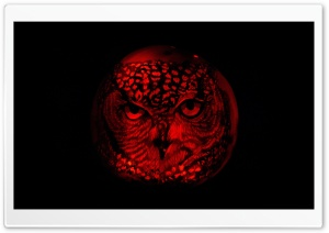 Owl Pumpkin Carving HD Wide Wallpaper for Widescreen