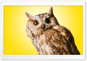 Owl Yellow Ultra HD Wallpaper for 4K UHD Widescreen desktop, tablet & smartphone