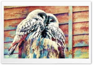 Owls Painting HD Wide Wallpaper for Widescreen