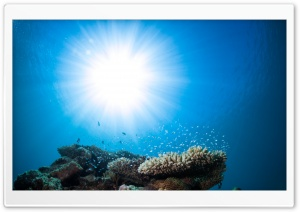 Pacific Ocean Underwater Animals HD Wide Wallpaper for Widescreen