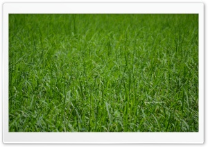 Paddy HD Wide Wallpaper for Widescreen